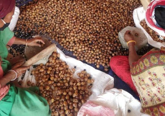 Jak zpracováváme mýdlové ořechy